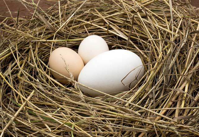 Yumurtalar hakkında ilginç bilgiler